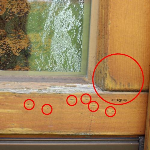 Gut gemocht Holzfenster pflegen – Überblick der Wartungsarbeiten JQ06